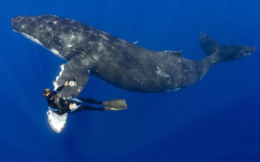 Человек и кит. Горбатый кит