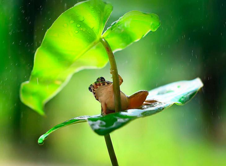 Лягушка и тропический дождь на острове Борнео, Индонезия