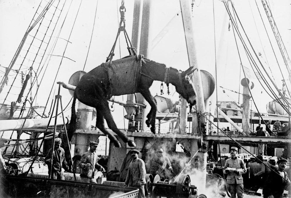 Погрузка ослов в Александрии, Египет