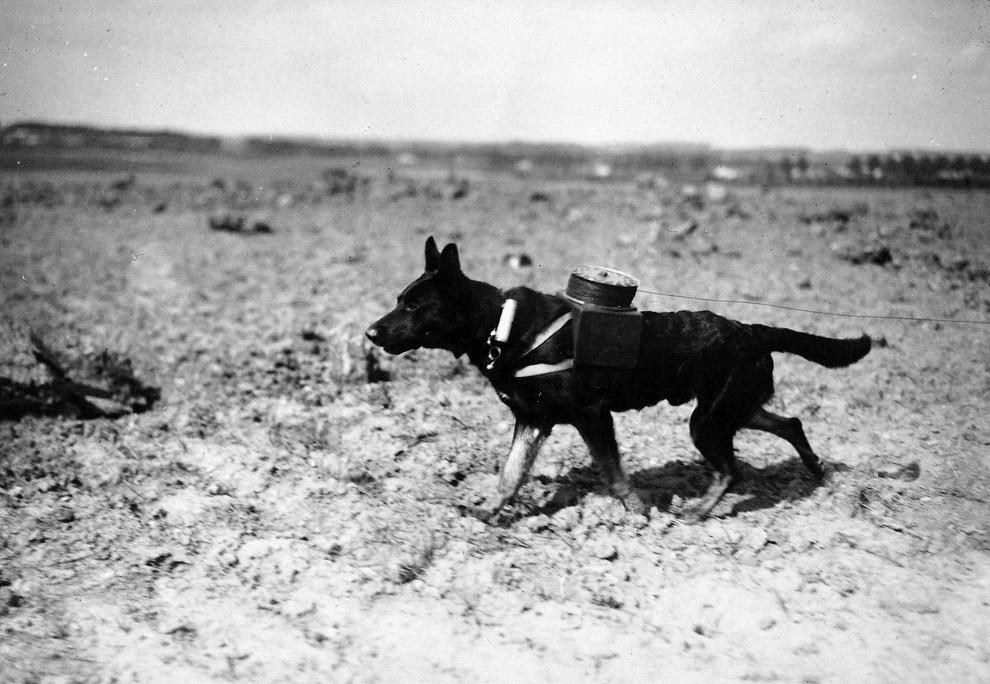 Собака с катушкой