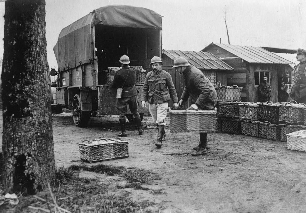 Бельгийские военные голуби