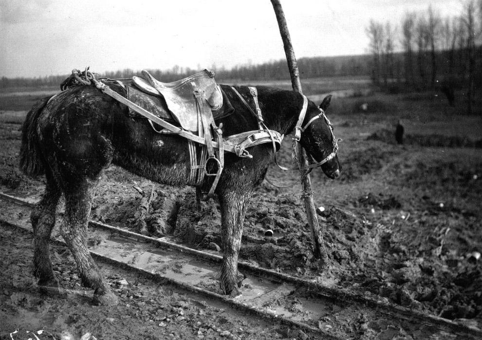 Лошадь у столба
