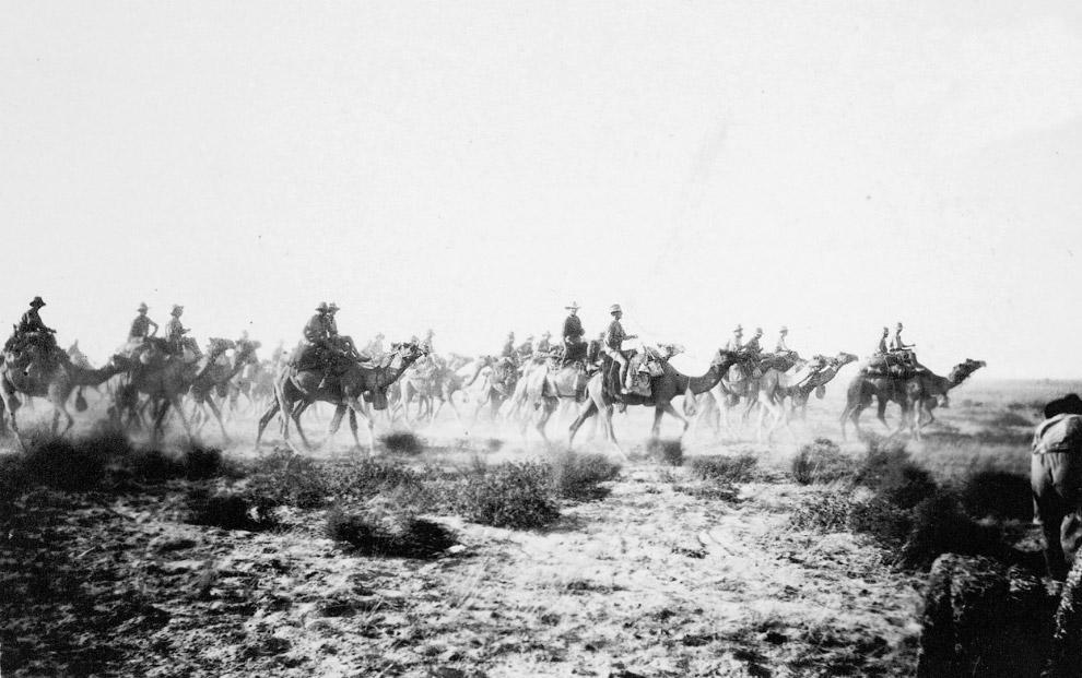 Австралийские войска на верблюдах