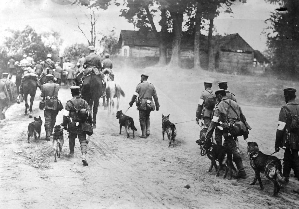 Сотрудники немецкого Красного Креста с собаками идут на фронт