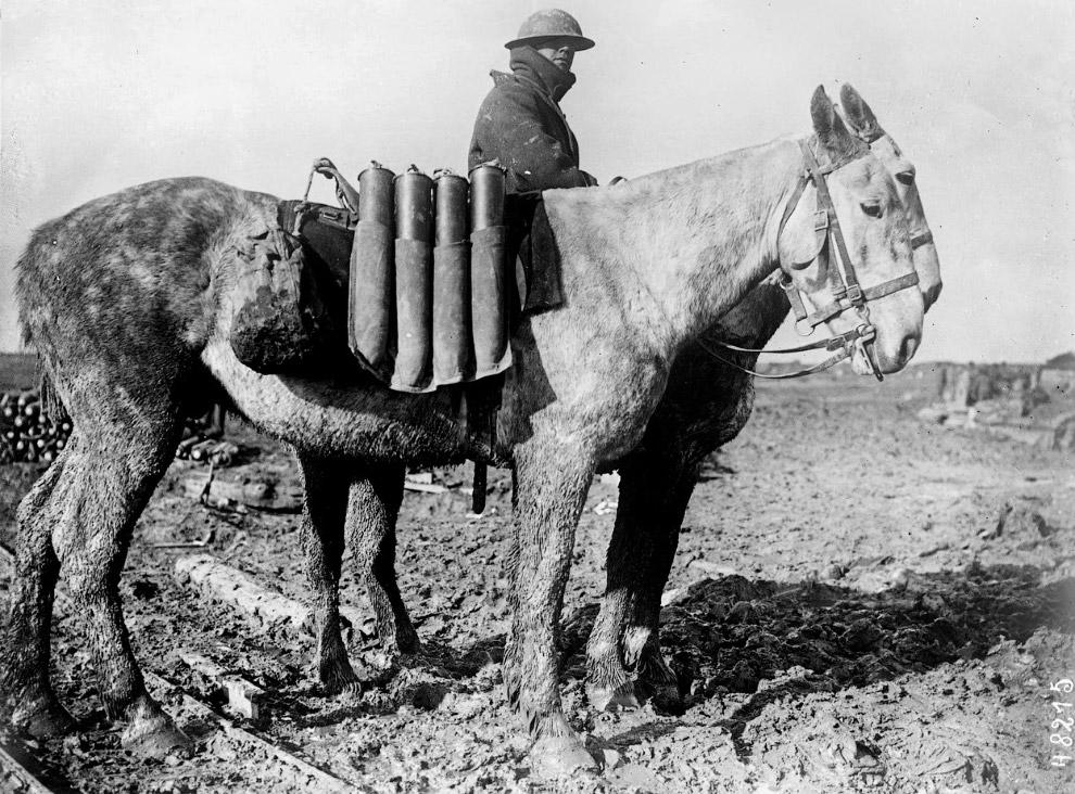 Западный фронт, снаряды на лошадях