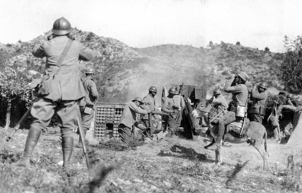 Сербский артиллерия и солдат и биноклем на осле