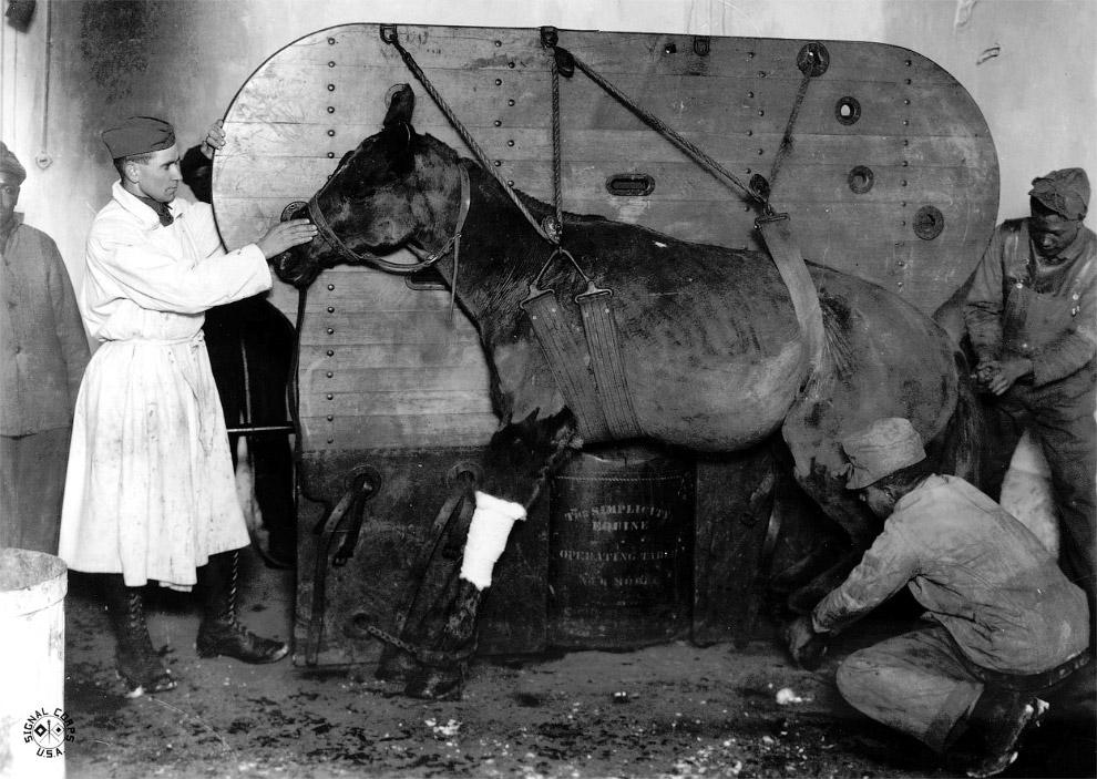 Ветеринар оказывает помощь раненой лошади