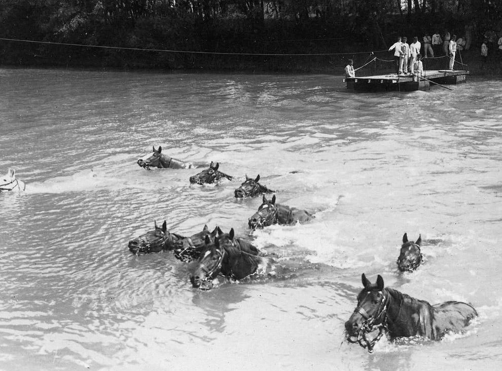 Французские кавалерийские лошади переплывают реку на севере Франции
