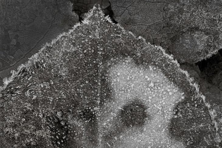 Замерзший осиновый лист возле озера Паркер