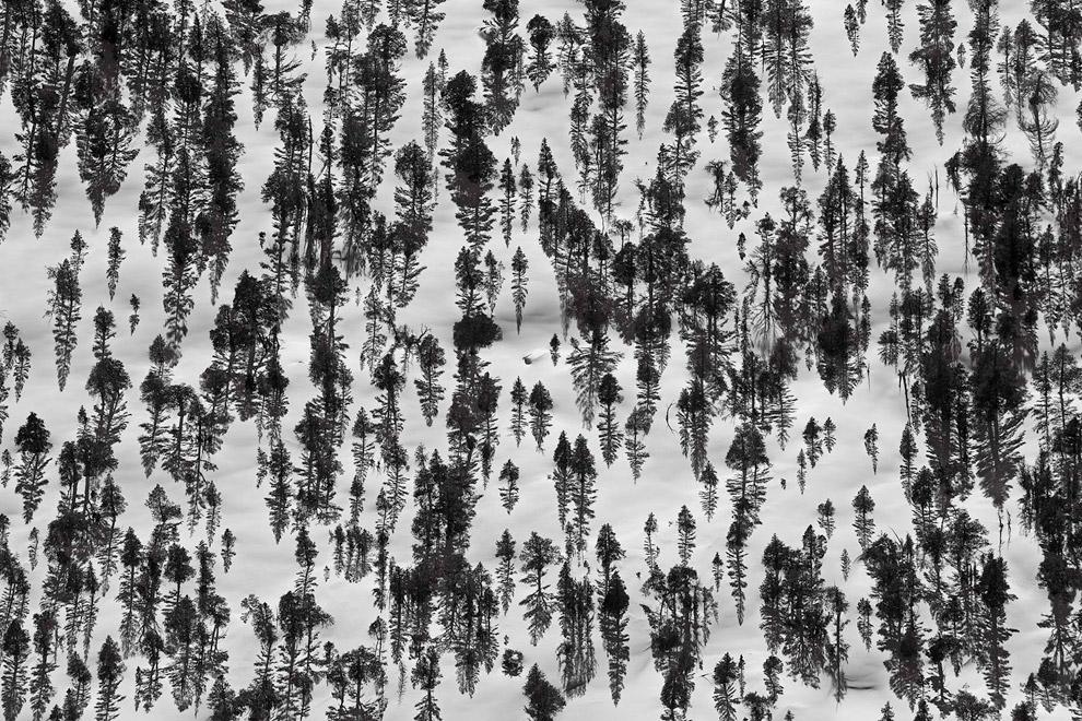 Заснеженный лес около озера Gem