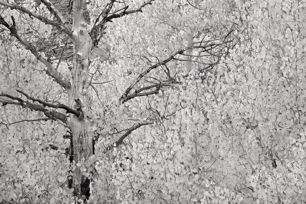 Так выглядит золотая осень в черно-белом цвете
