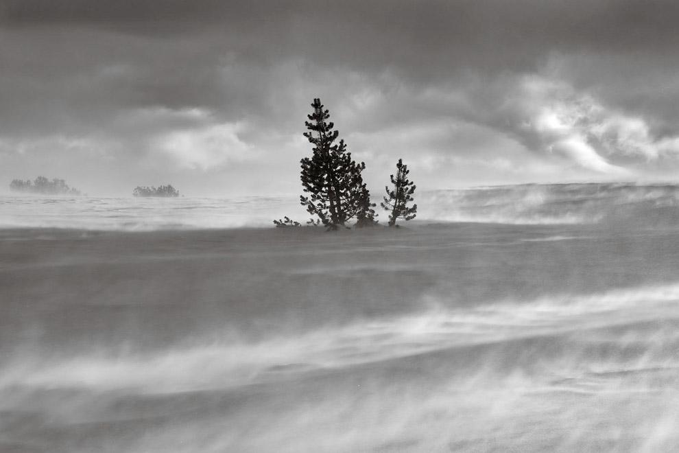 Снежная буря в заповеднике Ансель Адамс