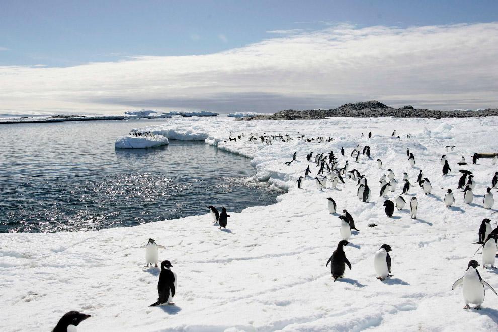 Мыс Денисон в Антарктиде