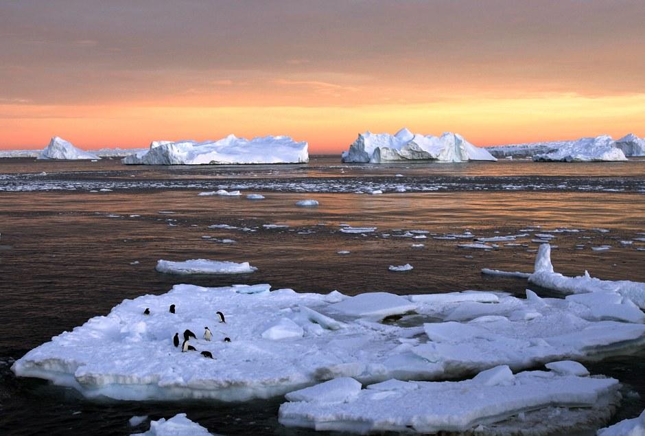 Пингвины на остатка льдин около французской станции Дюмон-Дюрвиль в Восточной Антарктиде