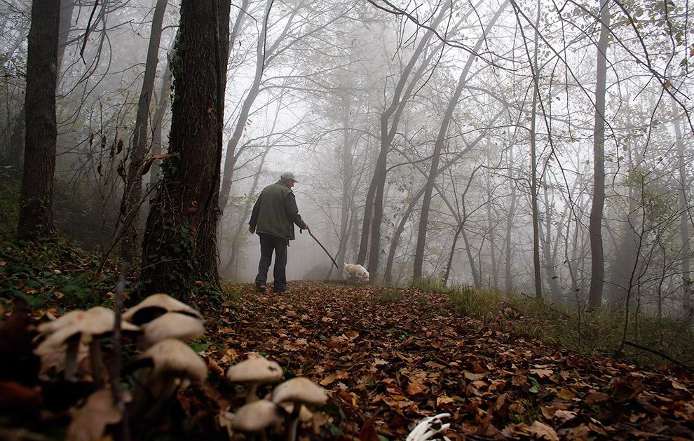 66-летний итальянский охотник за трюфелями Эцио Коста