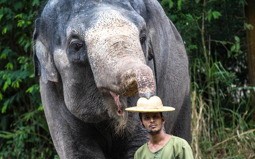 Слон с погонщиком в в Сингапурском зоопарке
