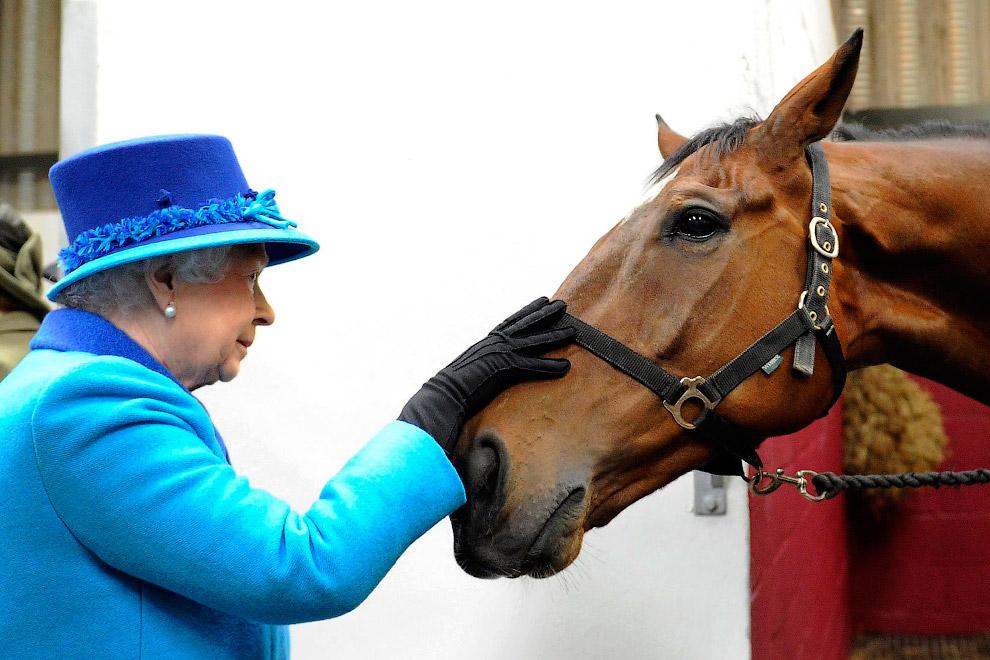 Королева Англии Елизавета в лошадином госпитале