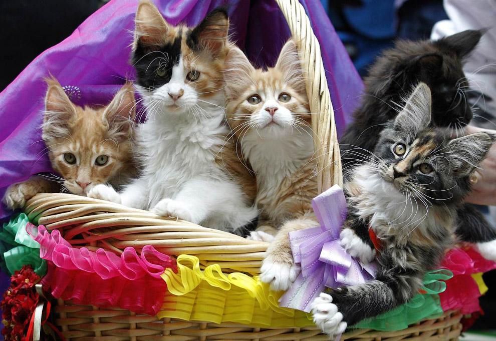 Выставка кошек в Литве
