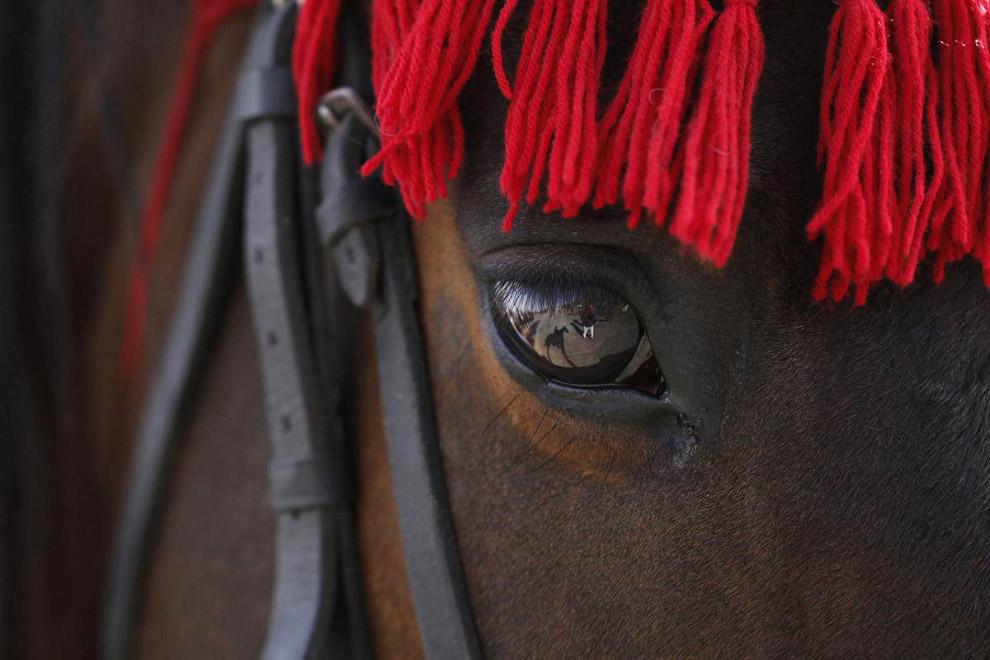 Ежегодный конно-спортивной фестиваля, в Катманду, Непал