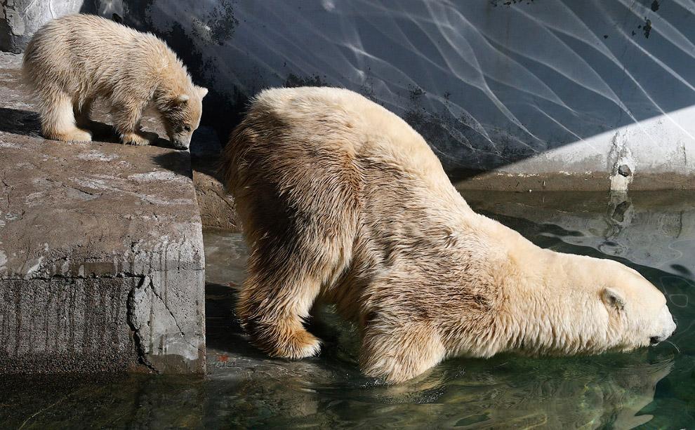 Медведи в Ленинградском зоопарке