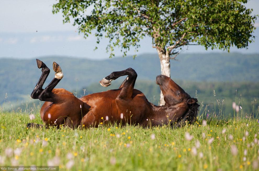Лошадка набегалась и решила подурачиться