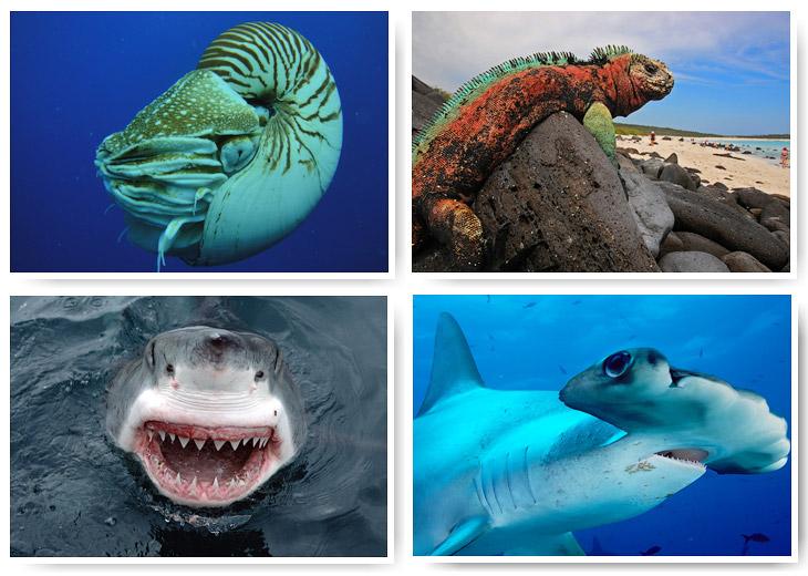Голубая бездна: места на планете, где можно встретить удивительных животных