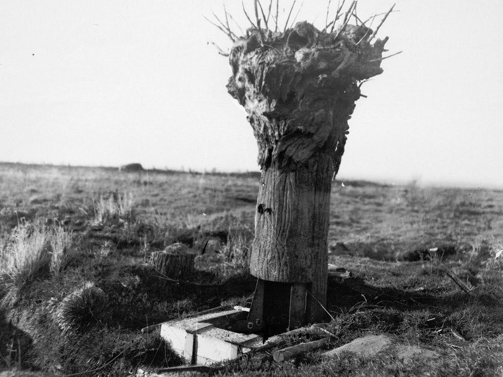 Шедевр маскировки – наблюдательный пункт в виде дерева