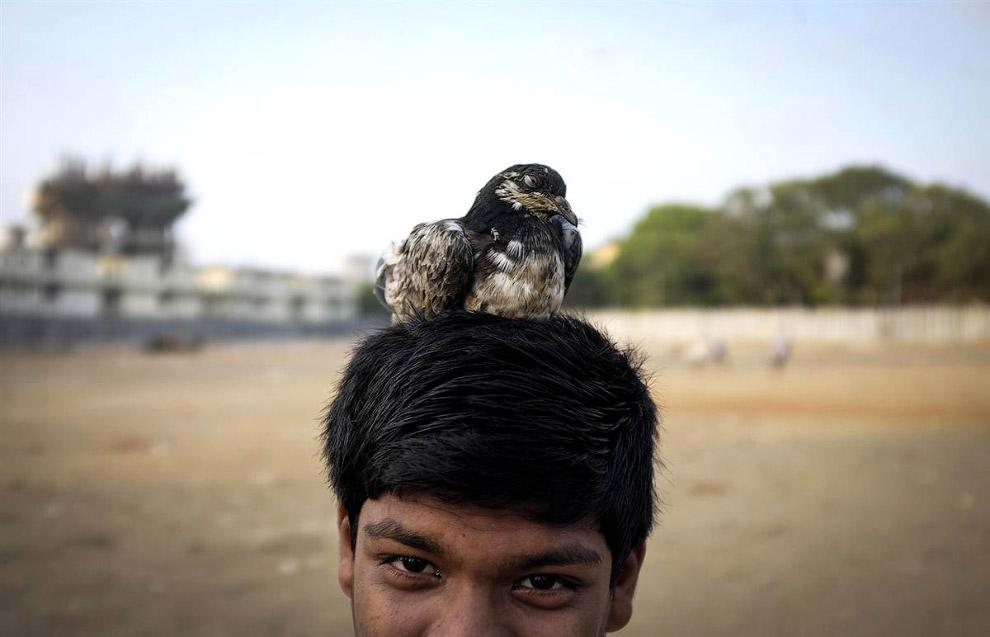 Мальчик и его домашний голубь, Мумбаи, Индия
