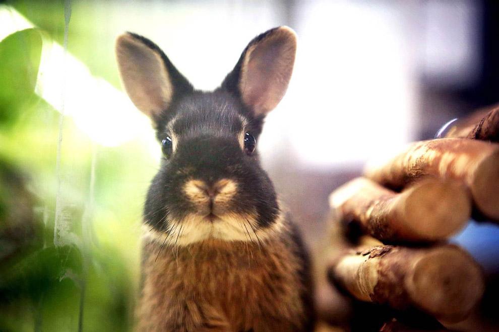 Кролик в зоомагазине в Германии, ждет своего хозяина