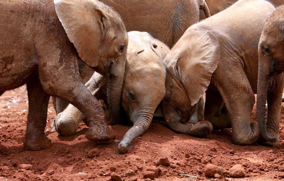 Слоновий детдом