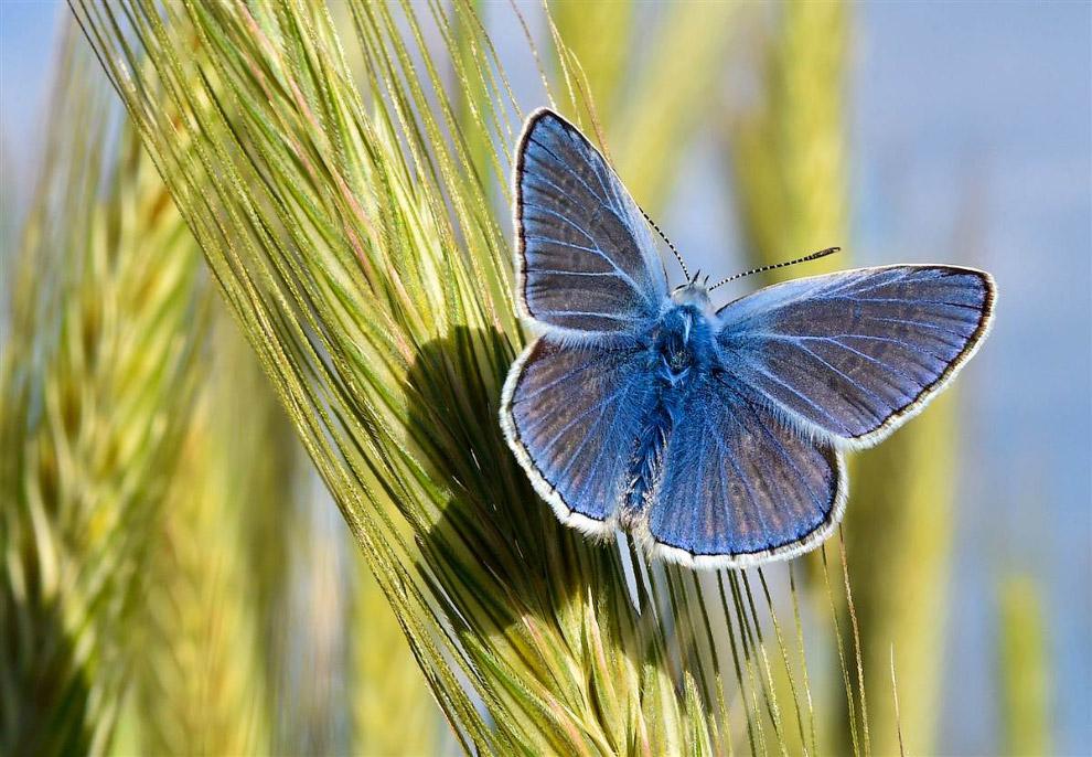 Красивая бабочка в парке в Германии
