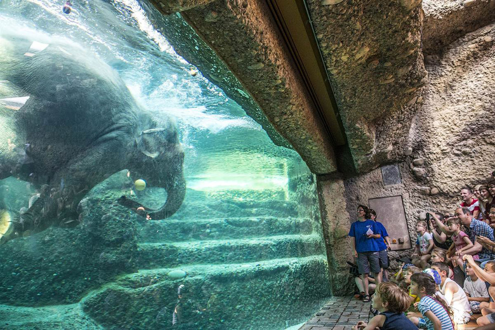 Подводный слон