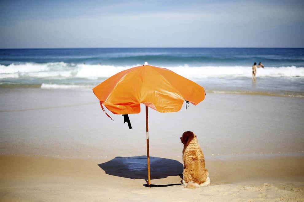 Собака скрывается от жары под зонтиком на пляже в  в Рио-де-Жанейро