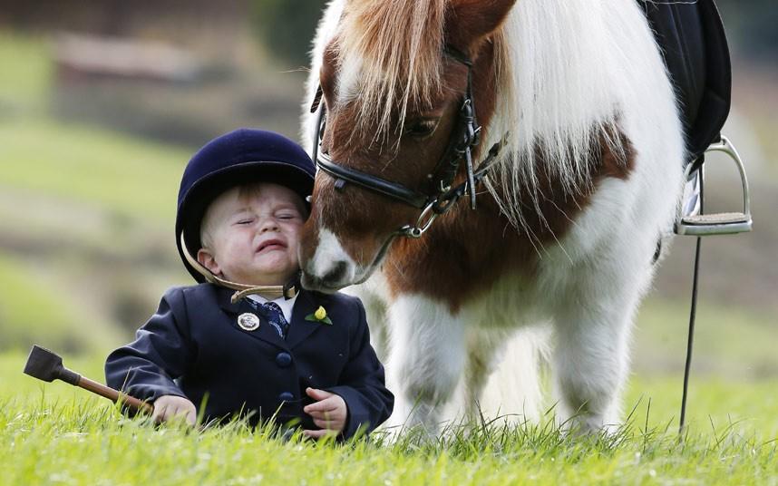 Общение с пони, Мельбурн, Австралия