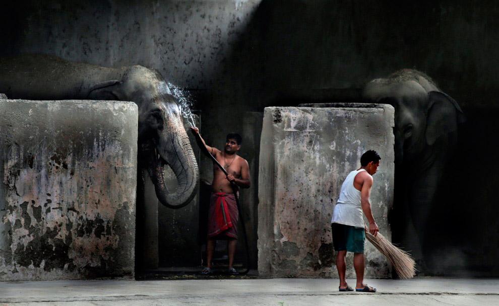 Помой слона. В зоопарке в Калькутте