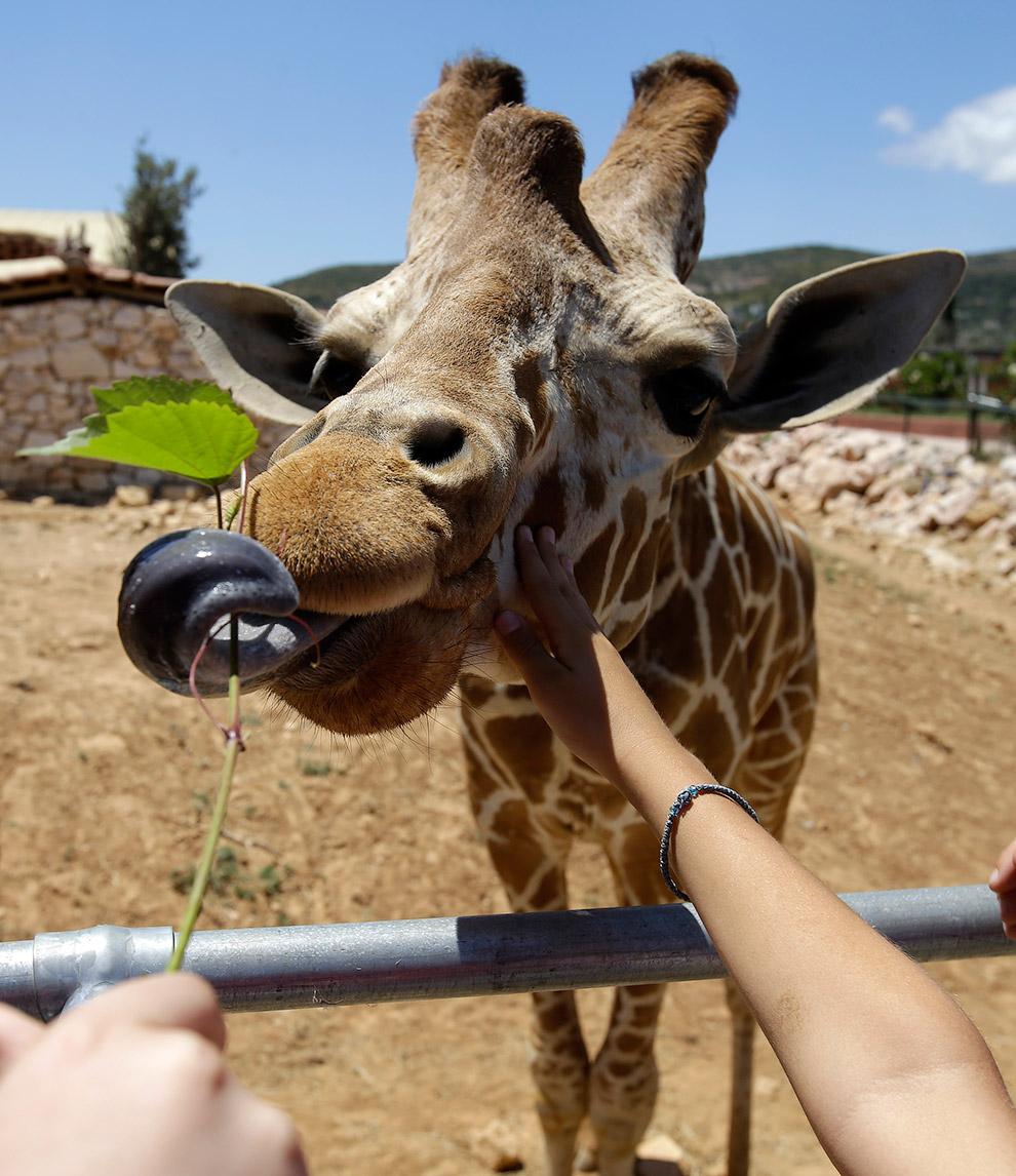 Зоопарк в Афинах