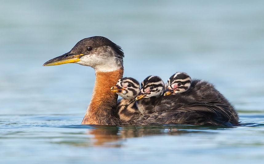 Птичий корабль в озере Онтарио, Канада