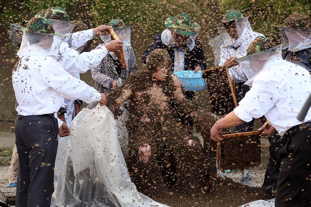 Очередной рекорд побить рекорд Гиннеса по количеству пчел на теле человека