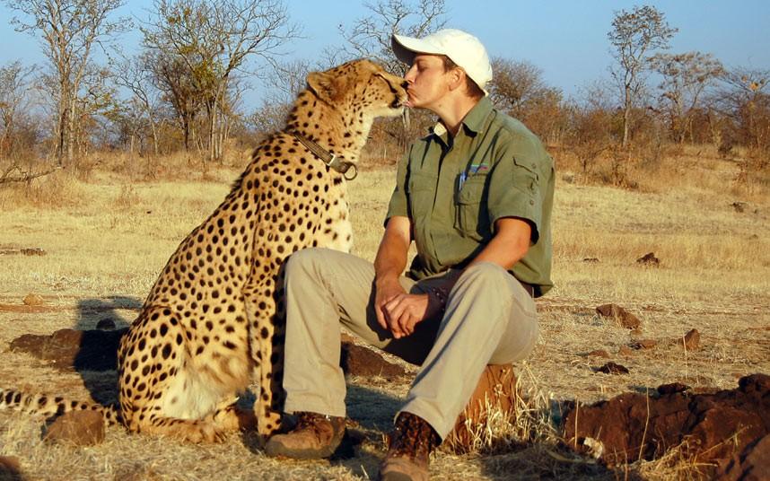 Гепард — лучший друг человека