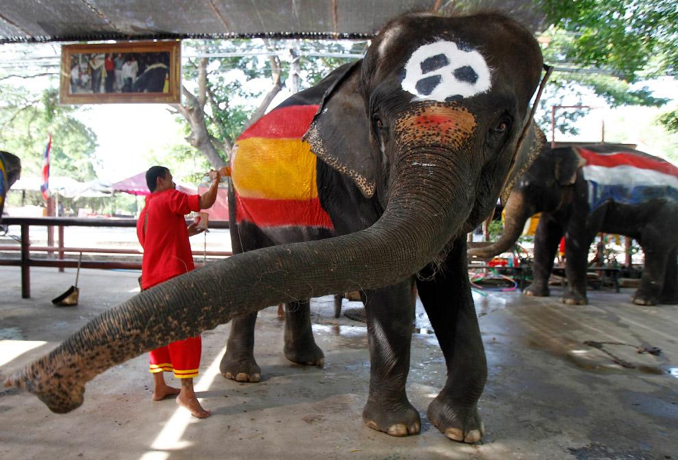 Акция в Таиланде перед ЧМ-2014: слонов раскрашивают в цвета флагов разных стран