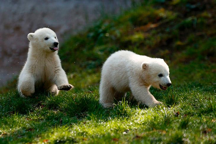 Маленькие животные