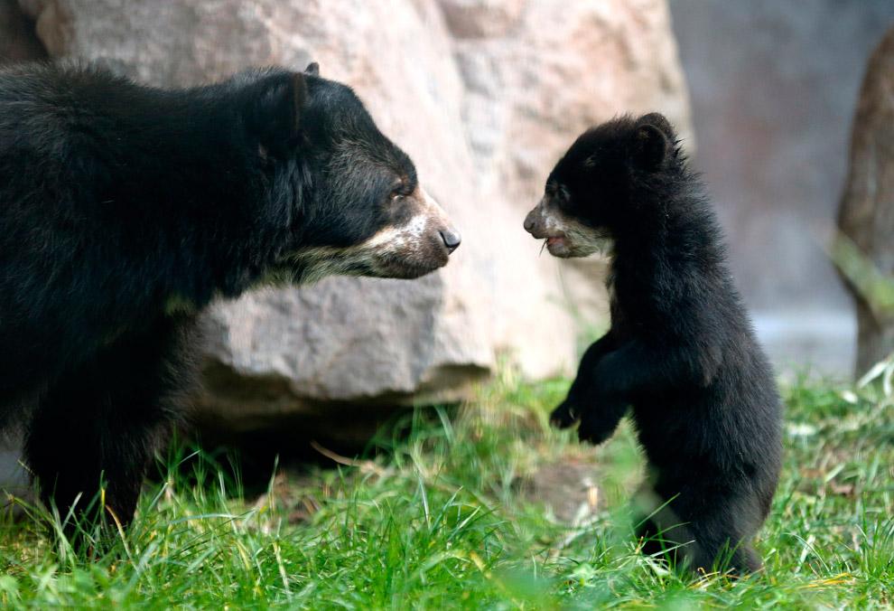 5-месячный медвежонок