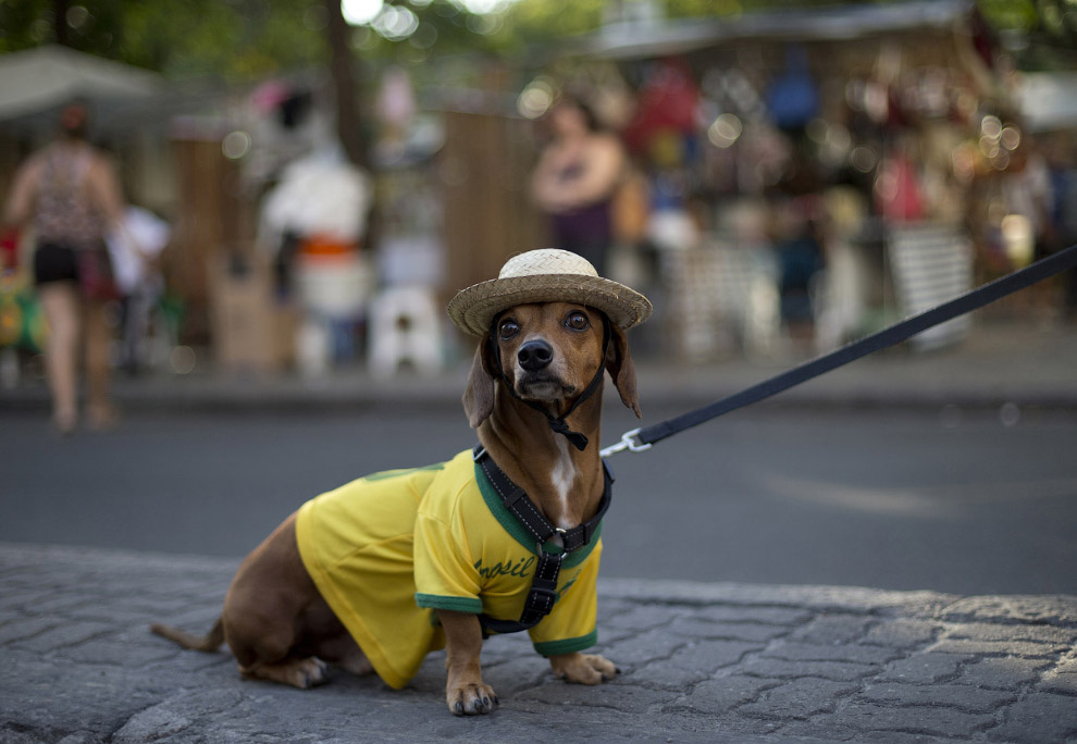 Четвероногий болельщик, Рио-де-Жанейро