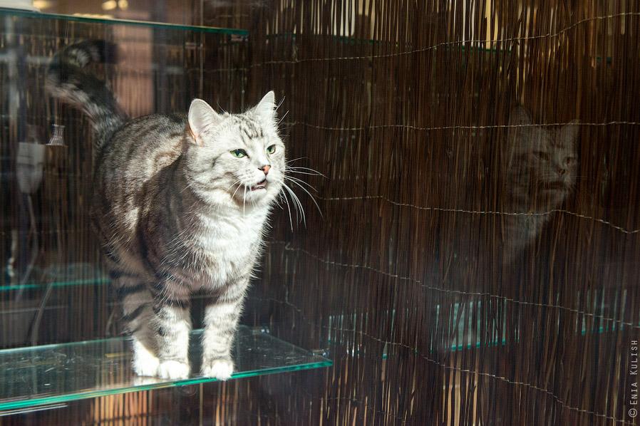 Гостиница для кошек