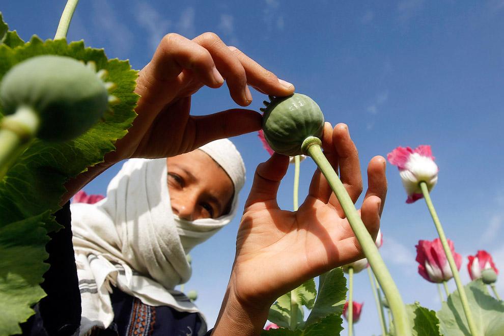 Маленькие сборщики мака, Афганистан