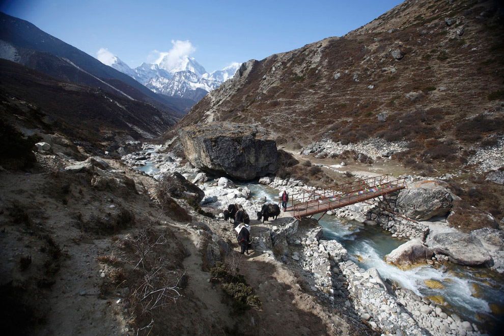 Пастух со своими яками, 4 300 метров над уровнем моря