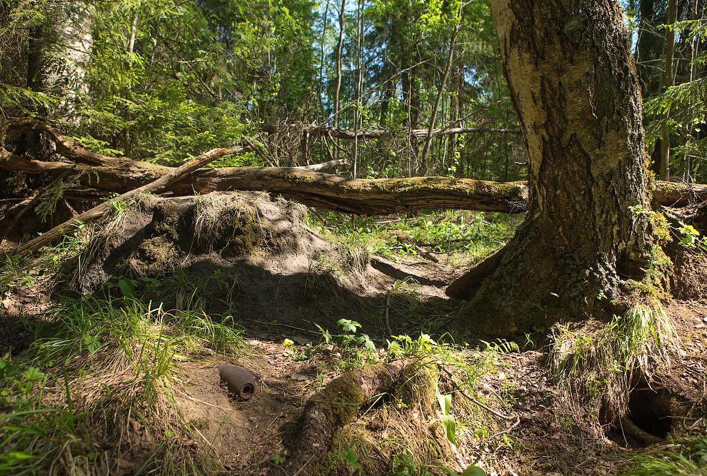 фото ворон в лесу