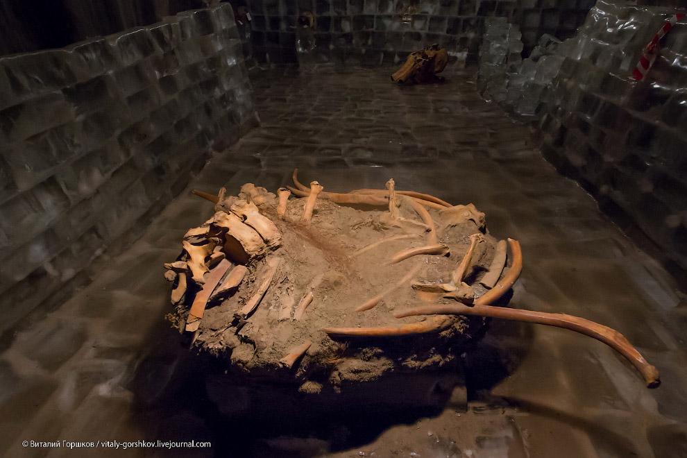 Музей мамонта в Хатанге (19 фото)