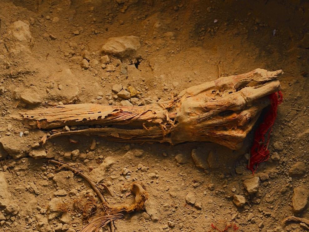 Превосходно сохранившаяся до наших дней рука знатной особы из перуанской цивилизации Уари все еще сжимает лоскут погребальной пелены