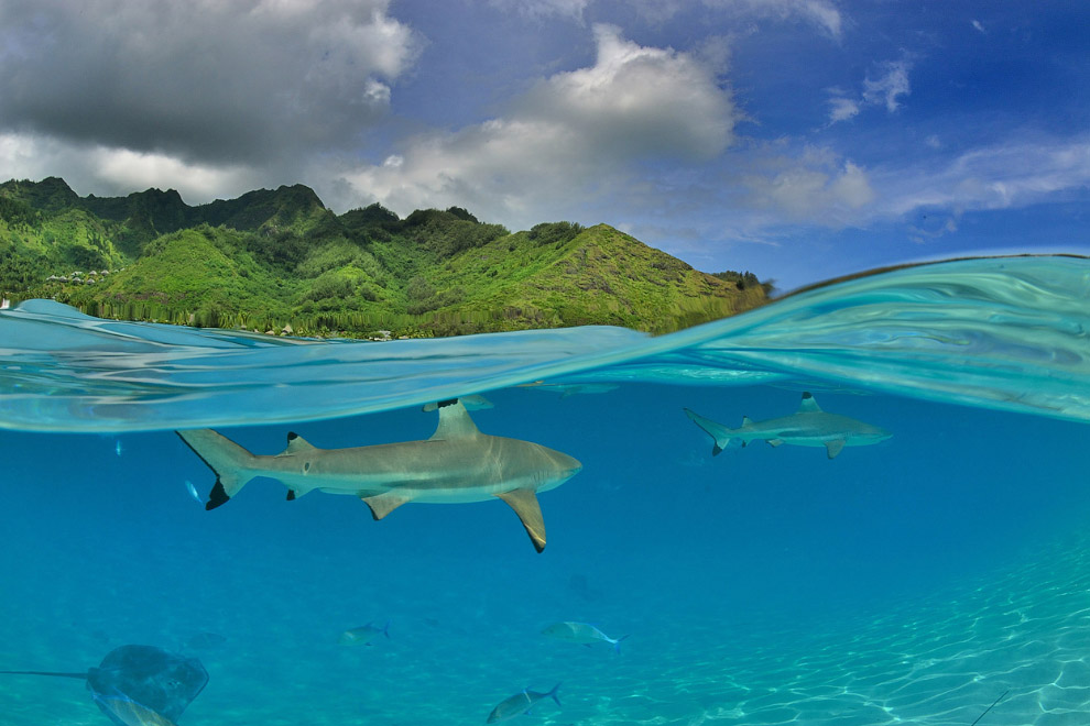 Остров Муреа (полинез. Жёлтая ящерица), Французская Полинезия